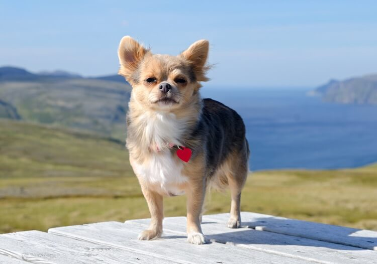 500+ Dog Names: The Best A to Z of Names for Dogs – My Pet's Name
