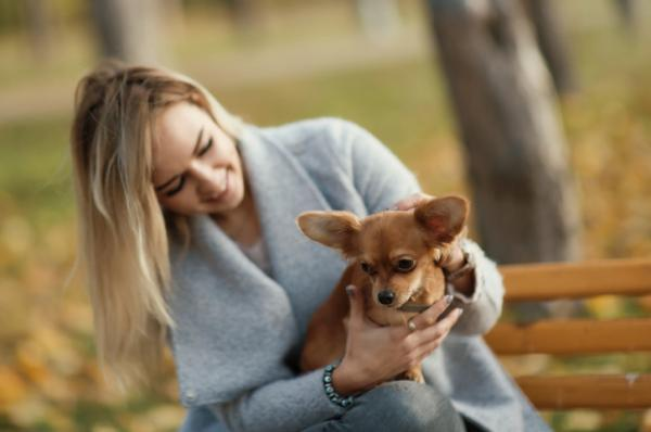 Why Do Chihuahuas Shiver - Puppy Shivering